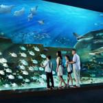 Khám phá thủy cung Marine Life Park