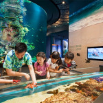 Tour du lịch Singapore: S.E.A Aquarium – Gardens by the bay