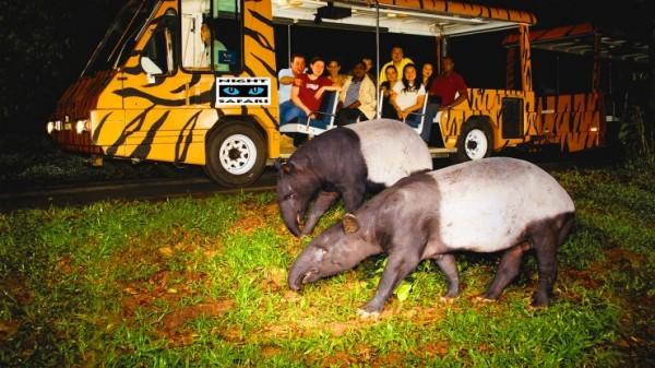 xem Night Safari