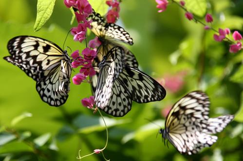 Công viên bướm & Vương quốc Côn trùng