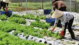 'Du lịch vườn tược' có 1 không 2 ngay ở TP Đà Lạt